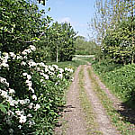 Conigre Mead Nature Reserve