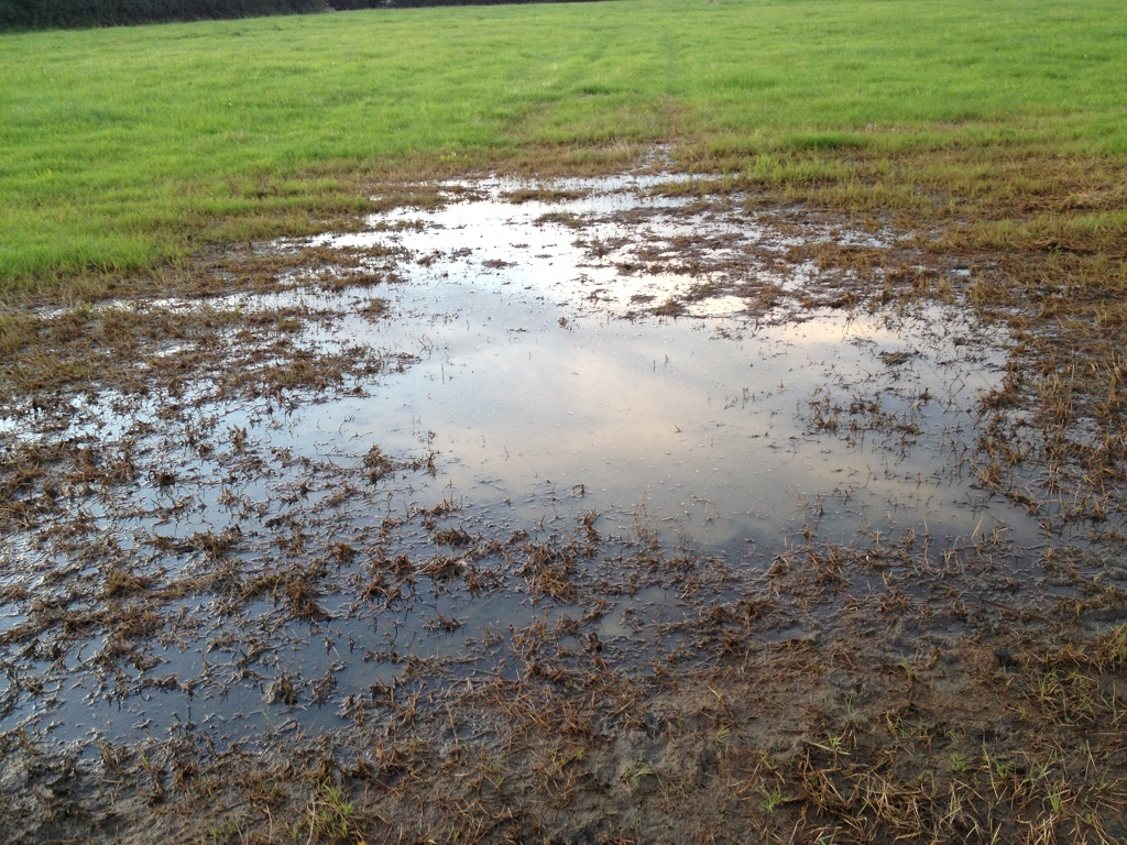 Wet section of field