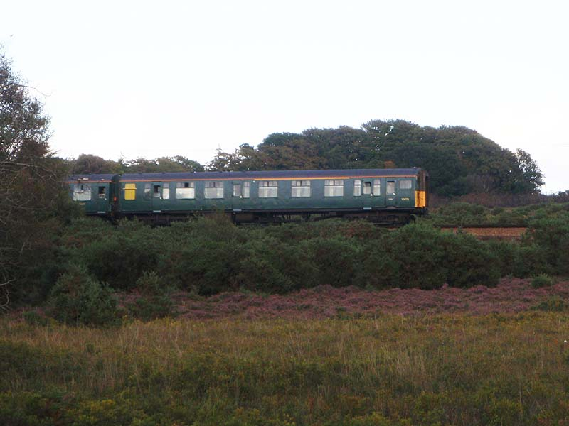Train in the New Forest