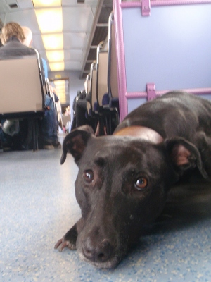Dog in class 142 train