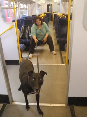 Dog in class 150 train