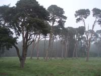 A small picture of trees in the fog