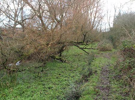 Disused Canal, Tockenham