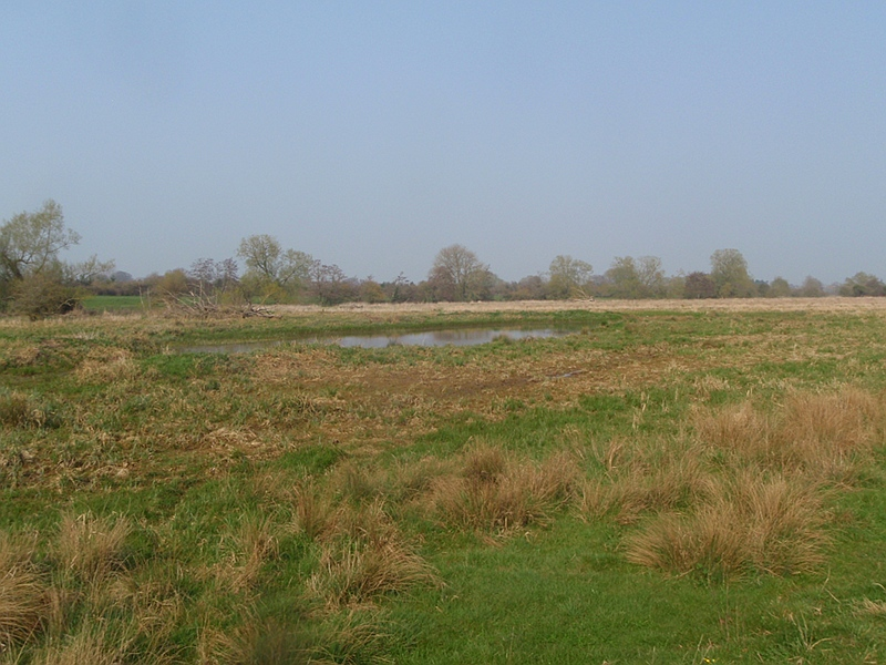 Water Meadow