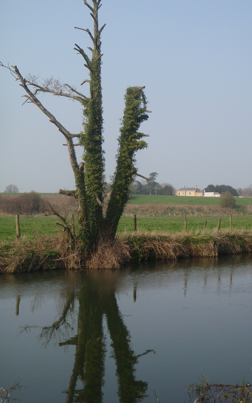 River Avon near Staverton