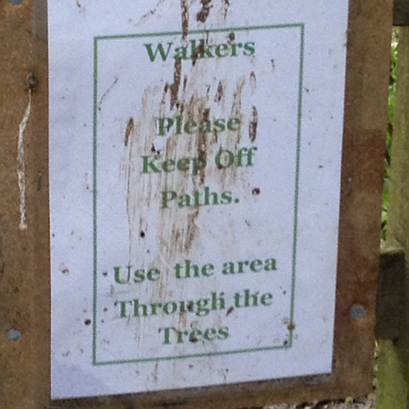 Giles Wood near Bowerhill
