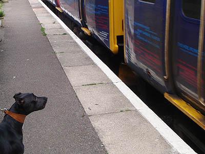 Dog Training Bradford On Avon