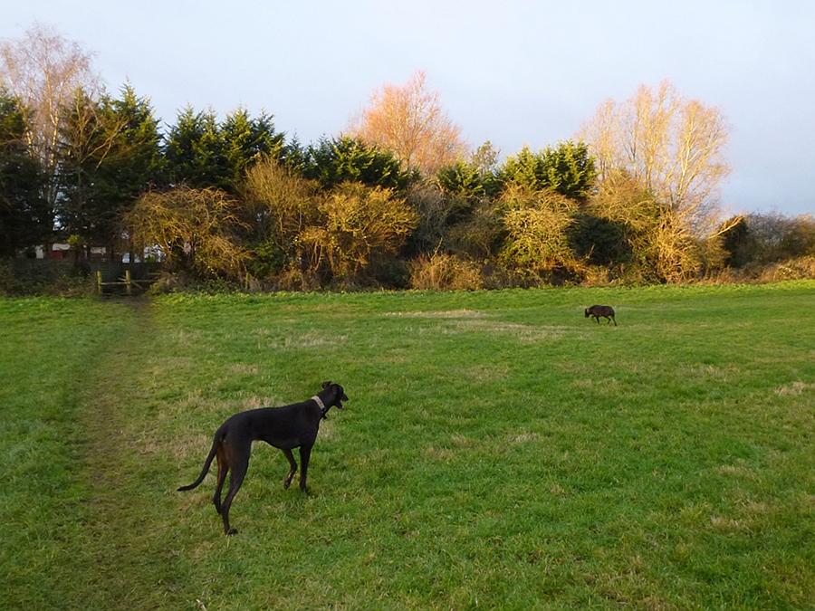 In the field behind The Spa, Melksham