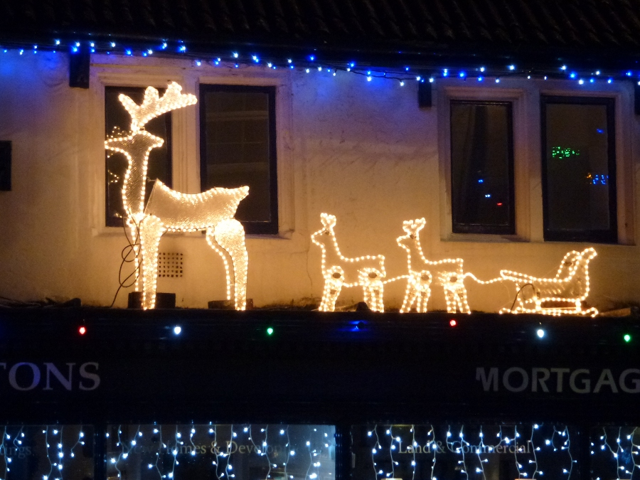 Reindeer at Kingstons